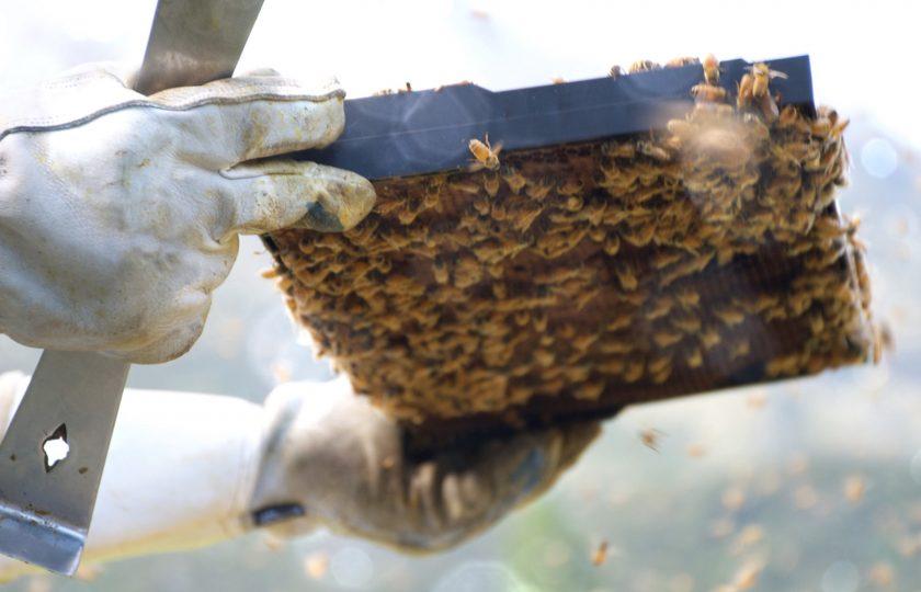 Honung från Malmös tak